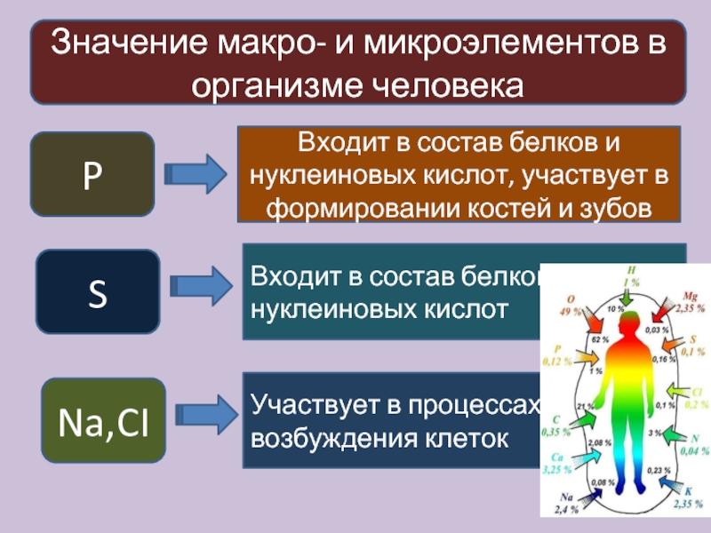 Что такое нутрициология?