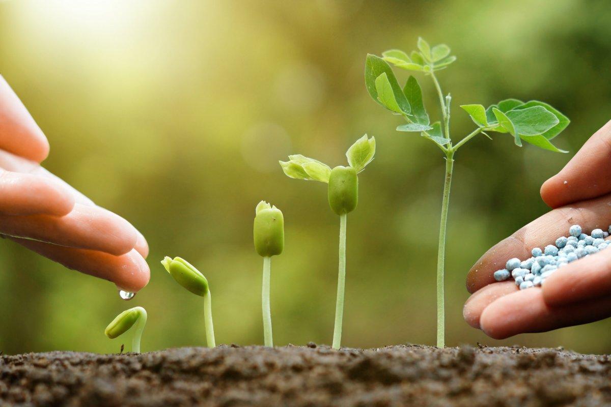 Комплексные удобрения для сада и огорода: названия, описания, состав, правила использования, как подобрать