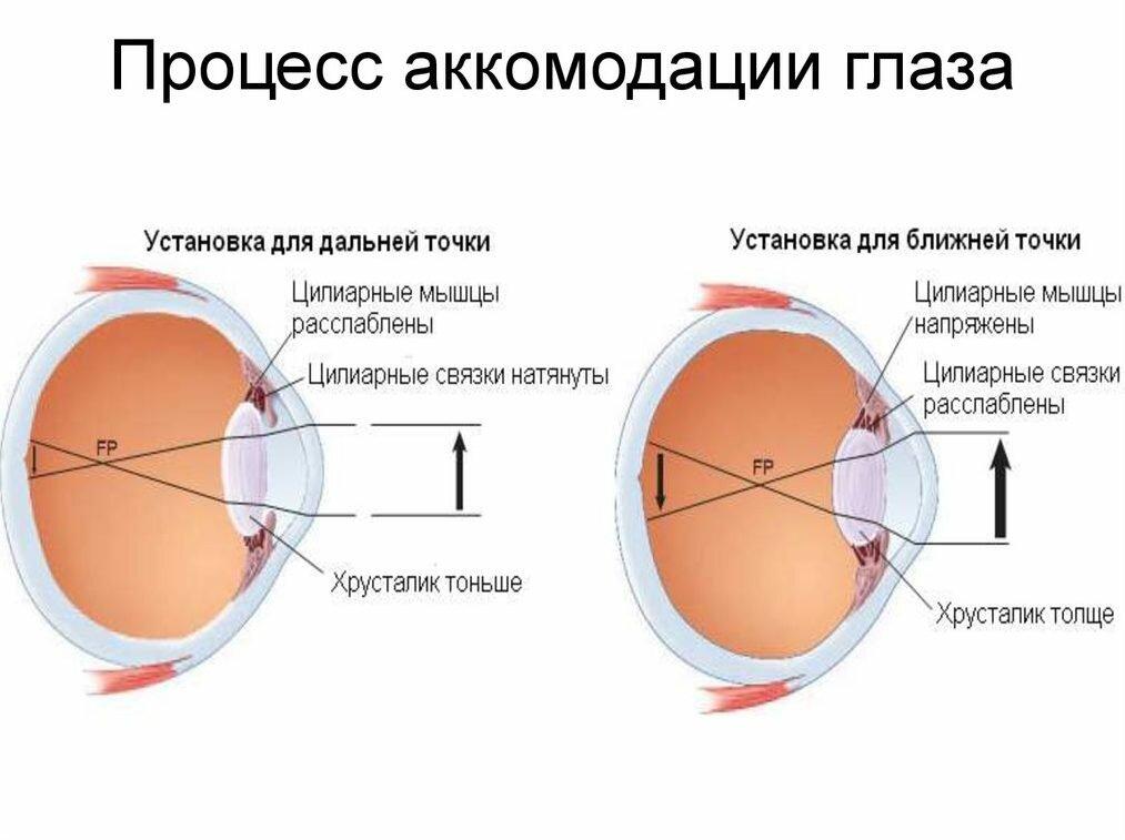 Энциклопедия - глаз