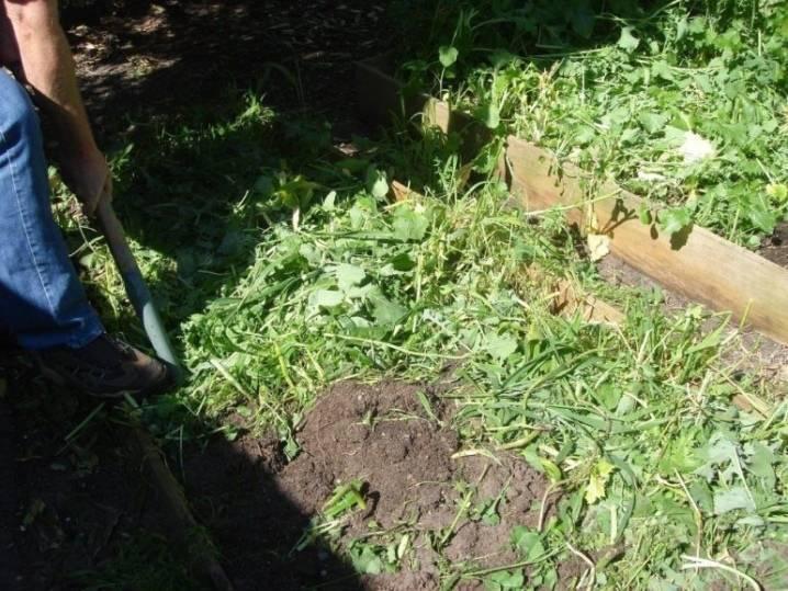 Когда какие сидераты сеять и закапывать: лучшие сидераты: горчица, фацелия, рожь; посев сидератов