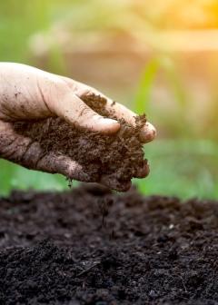 Перегной или навоз как удобрение – что лучше и почему?