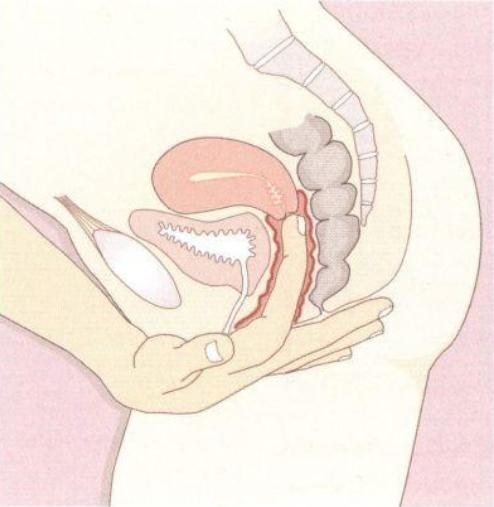 Влагалище женщины — википедия. что такое влагалище женщины