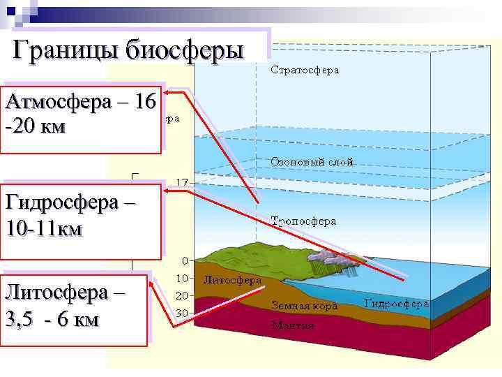 Биосфера: что это такое, ее состав, строение, свойства и функции