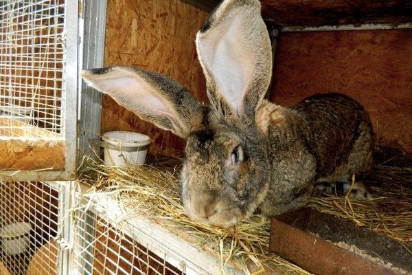 Все о кроликах: интересные факты, информация о домашних животных