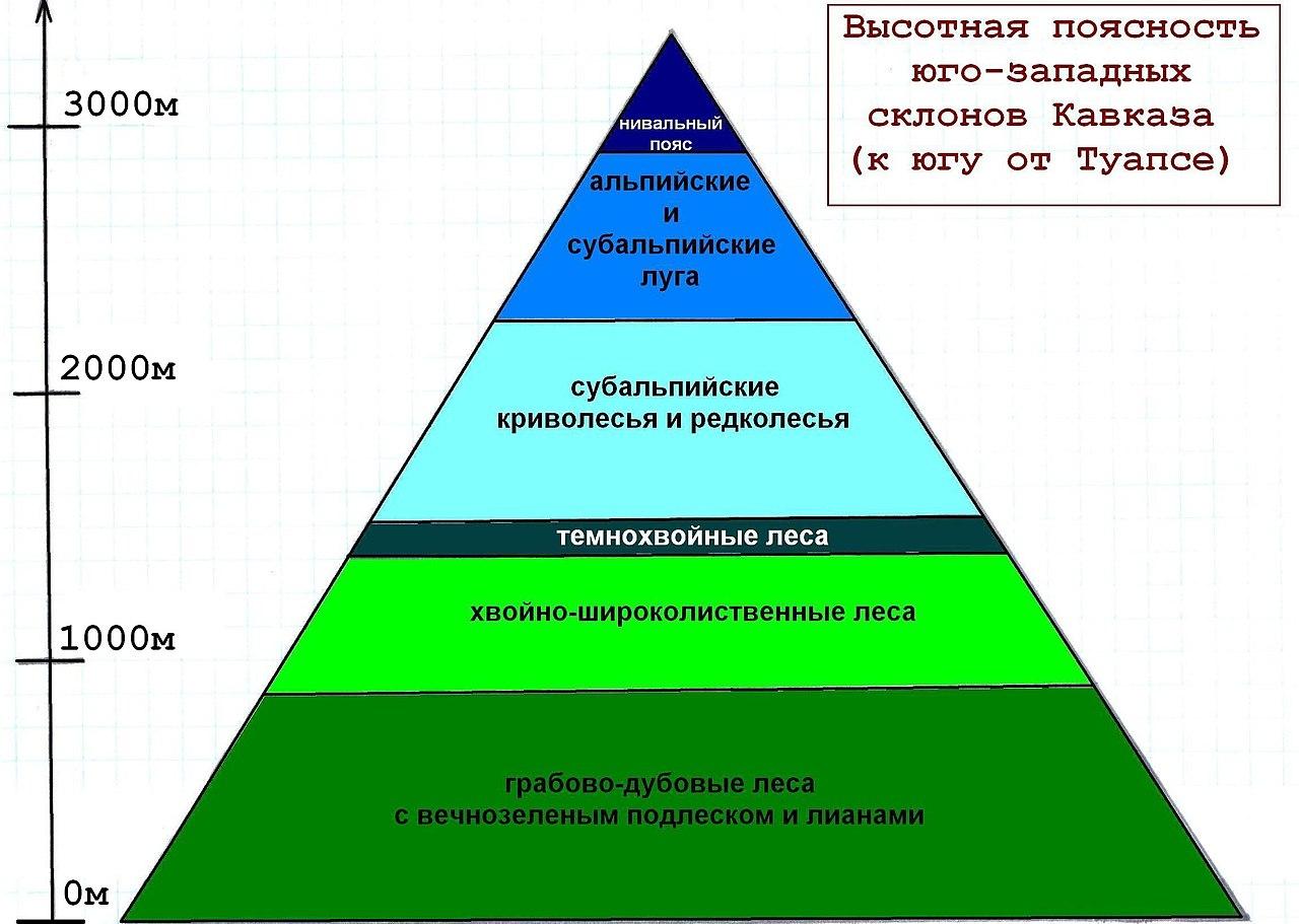 Что такое смена природных зон: поясность, закон широтной и высотной зональности