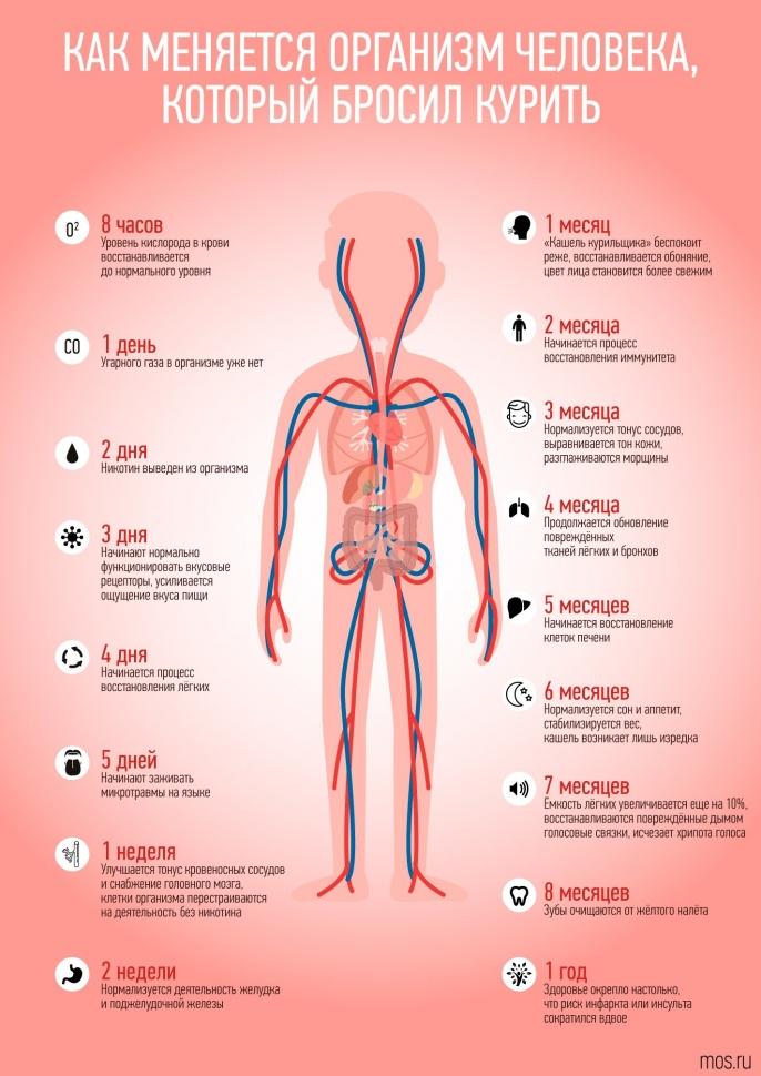 Функции легких. легкие человека: строение, функции