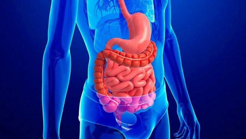 Кишечник человека — заболевания кишечника, симптомы и методы лечения
