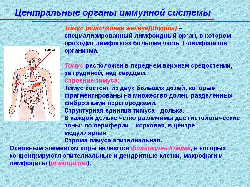 Виды иммунитета человека