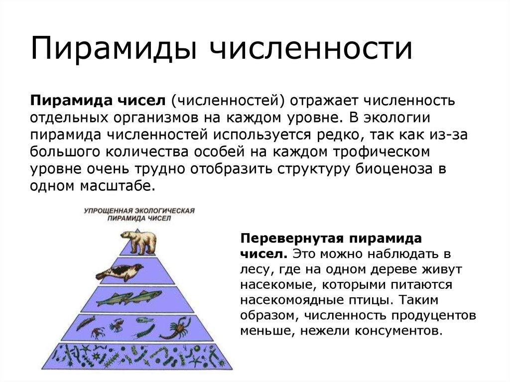 Зачем нужны и что отражают правила экологических пирамид