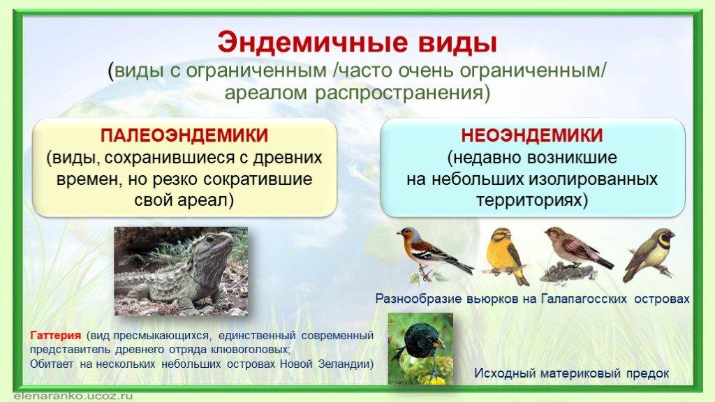 Что такое эндемики?
