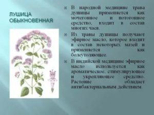 Дурман обыкновенный: фото, выращивание из семян, применение, лечебные свойства