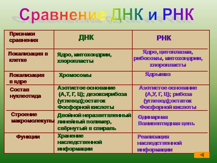 Рнк-полимераза