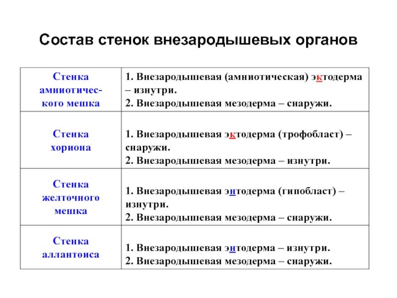Мезодерма - mesoderm - qwe.wiki