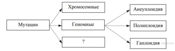 Модификационная изменчивость — википедия. что такое модификационная изменчивость