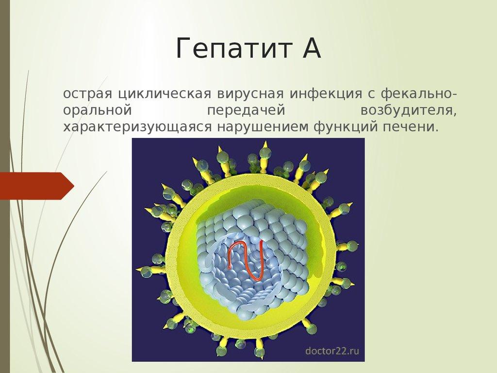 Что собой представляет болезнь гепатит c