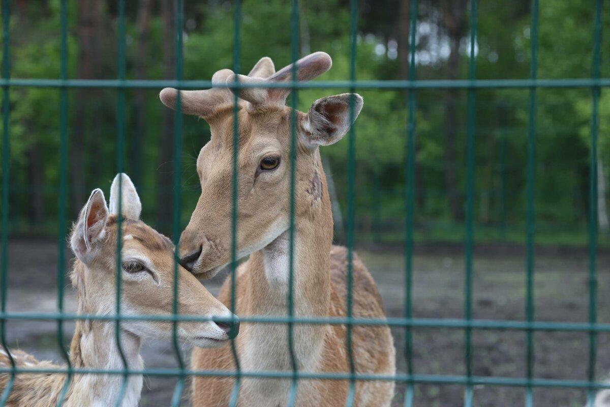 Что такое зоопарк?