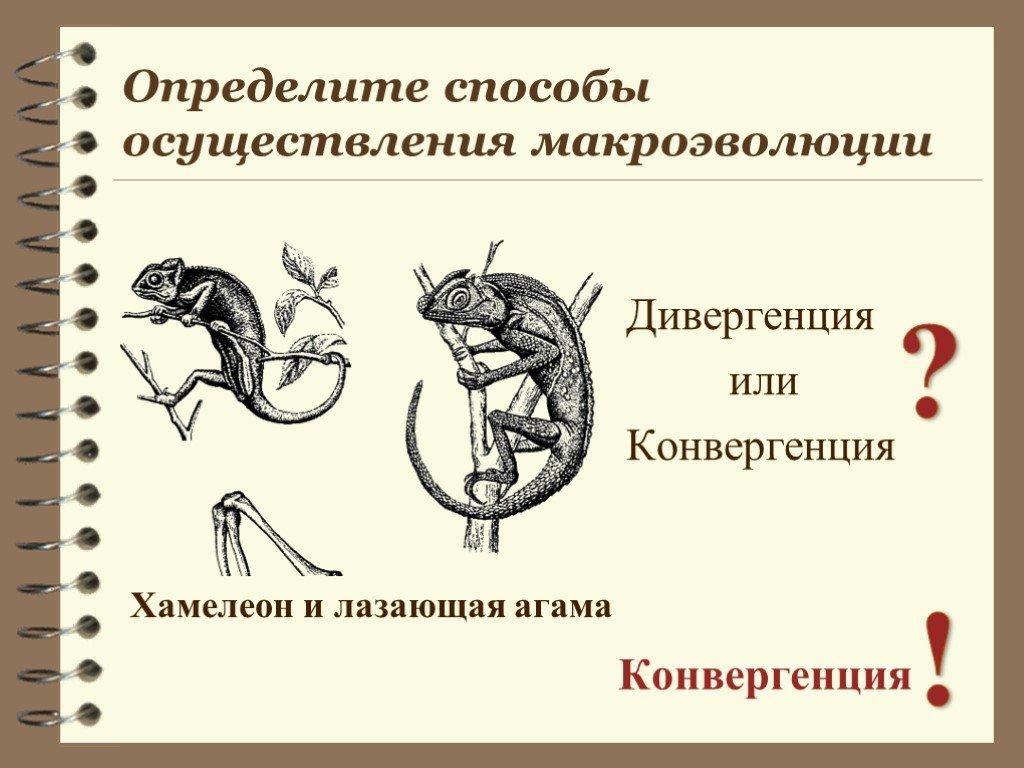 Дивергенция - что это в биологии, физике и трейдинге