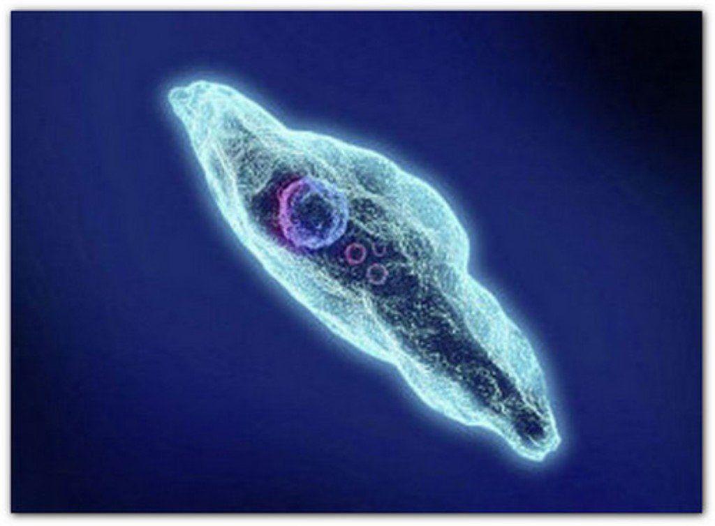 Токсоплазмоз (токсоплазма) - причины, симптомы, диагностика, лечение, осложнения и профилактика