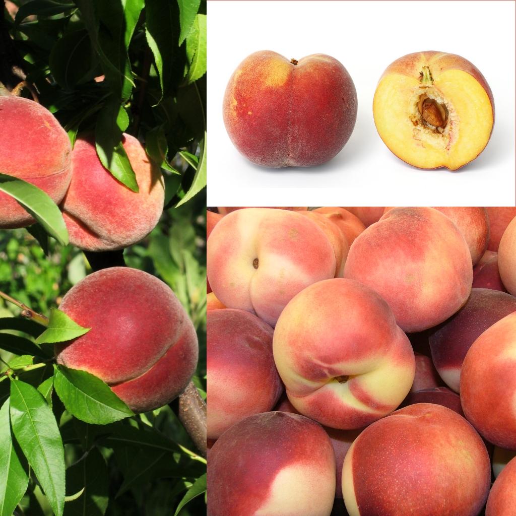 Инжирный персик — описание полезного фрукта, сорта, посадка и уход