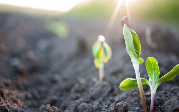 Вегетация растений – что это такое, сколько длится, как можно влиять на этот период при помощи удобрений и опрыскивания?