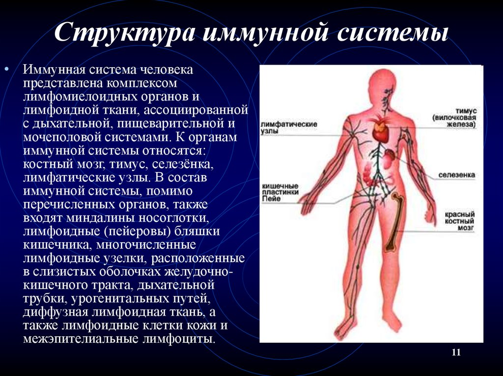 Что такое иммунитет и какие у него бывают виды