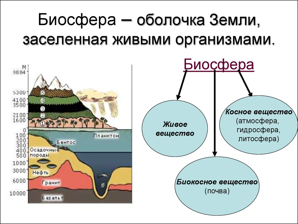 Биосфера чем она отличается от других оболочек. что такое биосфера, каковы ее составные части и чем она отличается от других оболочек земли? что такое биосфера и чем она отличается от других оболочек земли