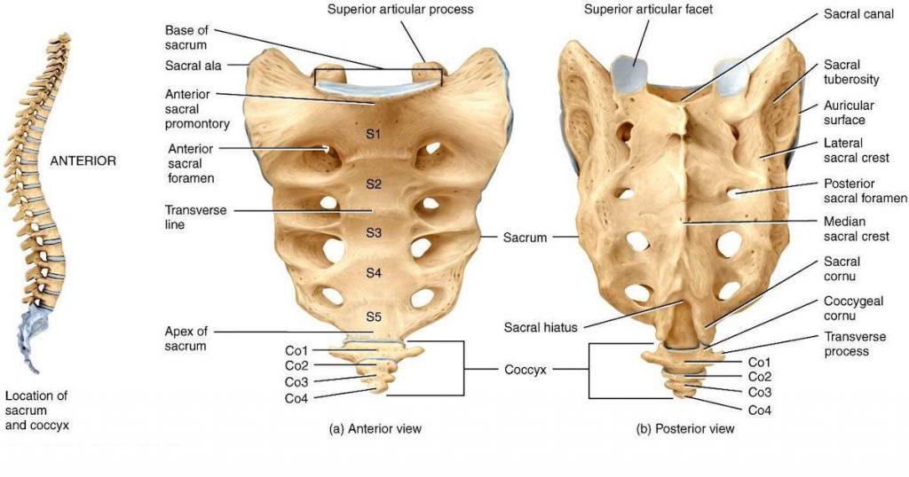 Эпителиальный копчиковый ход – причины, лечение, операция по иссечению