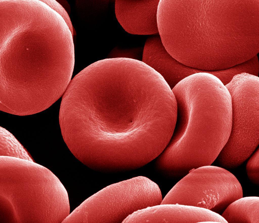 Эритроциты в крови: норма, за что отвечают и что показывают