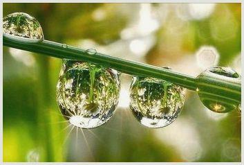 Мистическое явление природы. что такое роса?