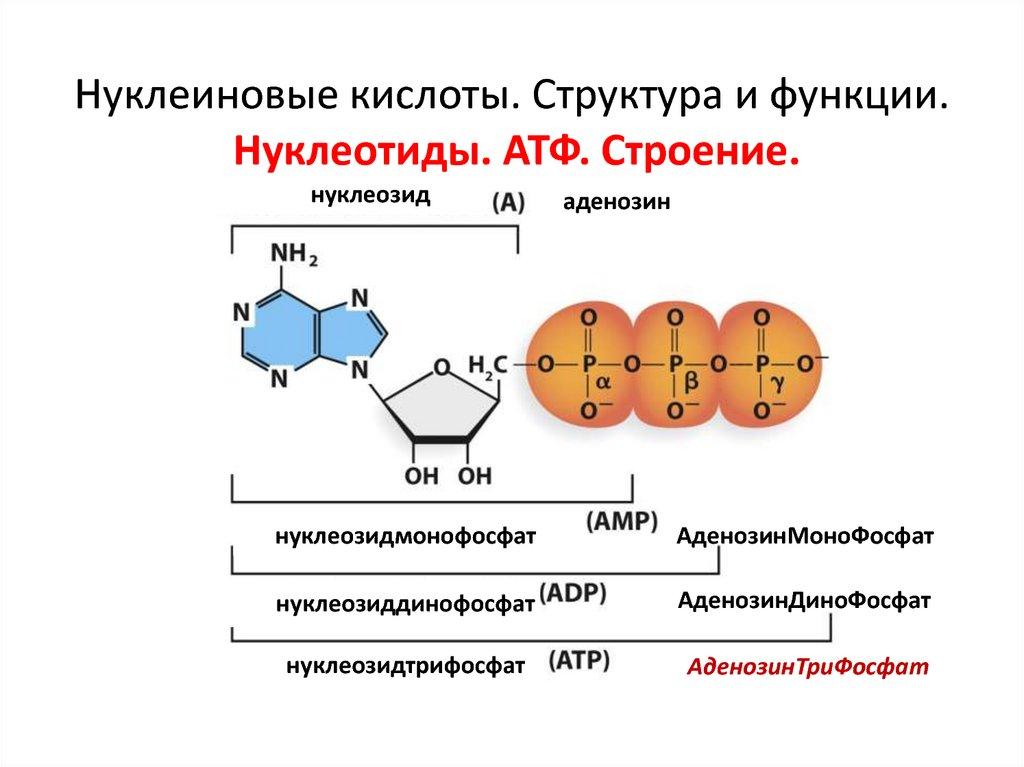 Нуклеиновые кислоты | clinic all