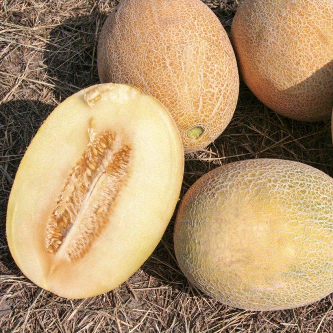 Дыня эфиопка - описание сорта, выращивание