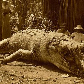 Крокодилы: виды,описание,фото,образ жизни,обитание