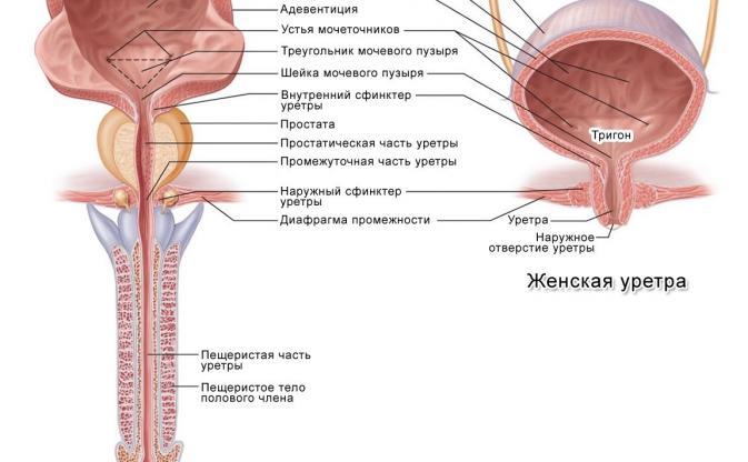 Признаки и лечение уретрита у женщин