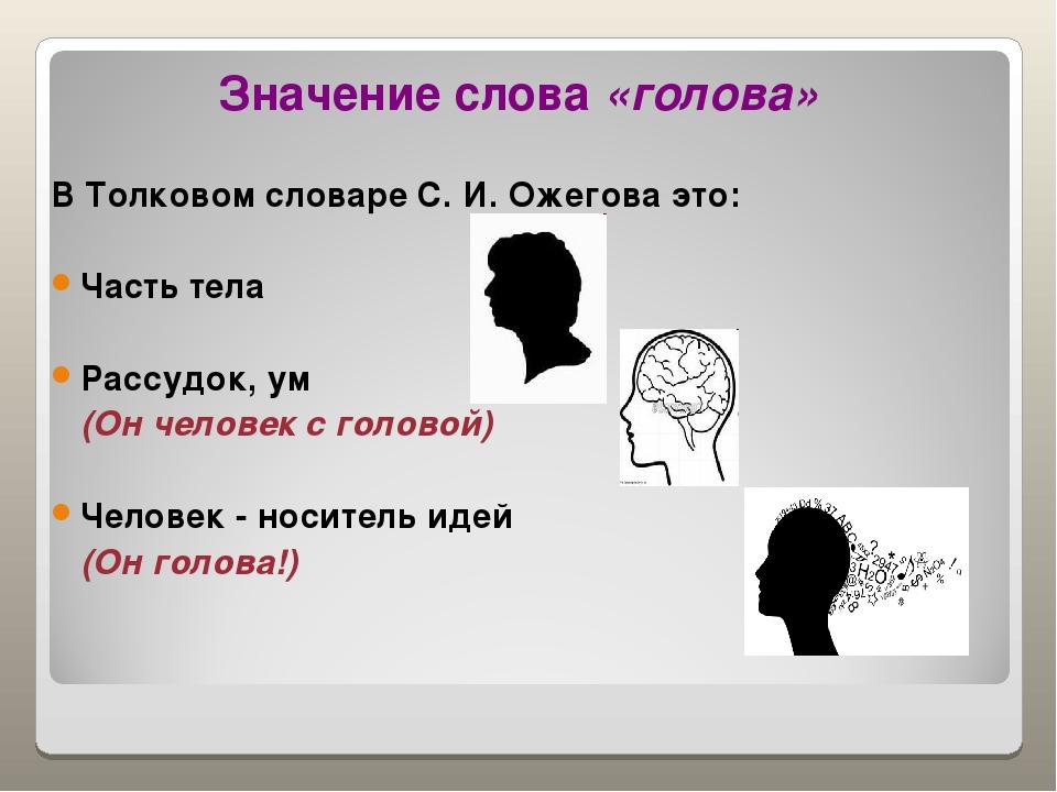 Области головы. анатомия головы человека