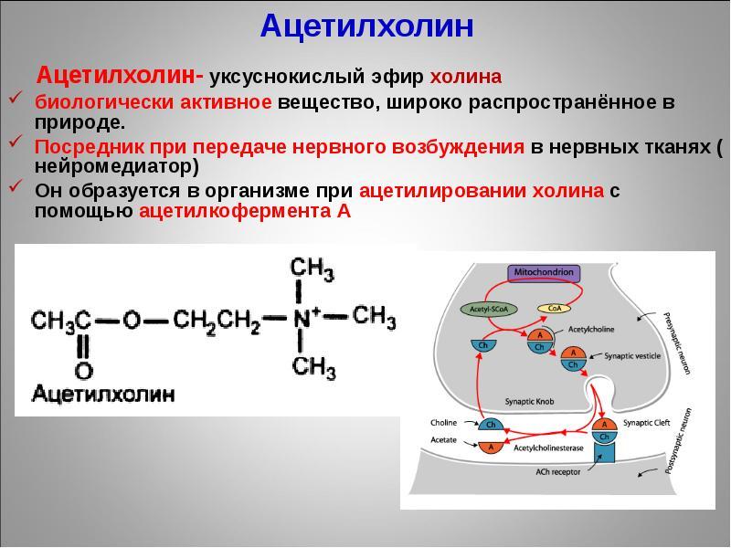 Ацетилхолин: действие на организм, свойства и побочные эффекты