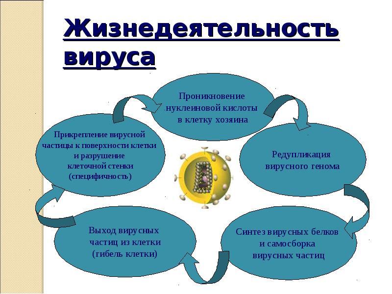 Жизнедеятельность — википедия с видео // wiki 2