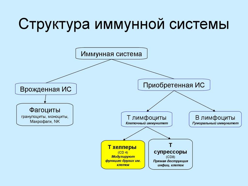 Иммунитет: основные виды и особенности классификации