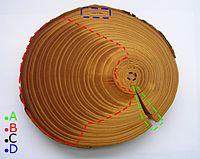 Пороки у древесины