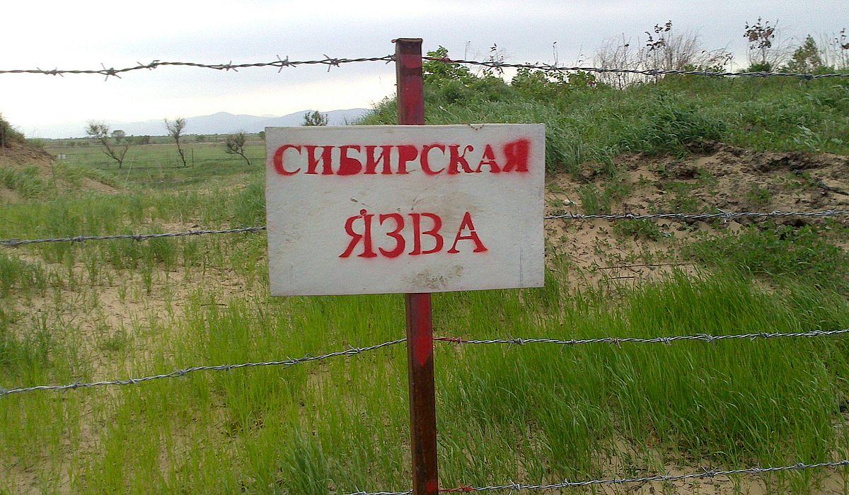 Сибирская язва (bacillus anthracis): характеристика возбудителя, заражение, симптоматика, диагностика, лечение