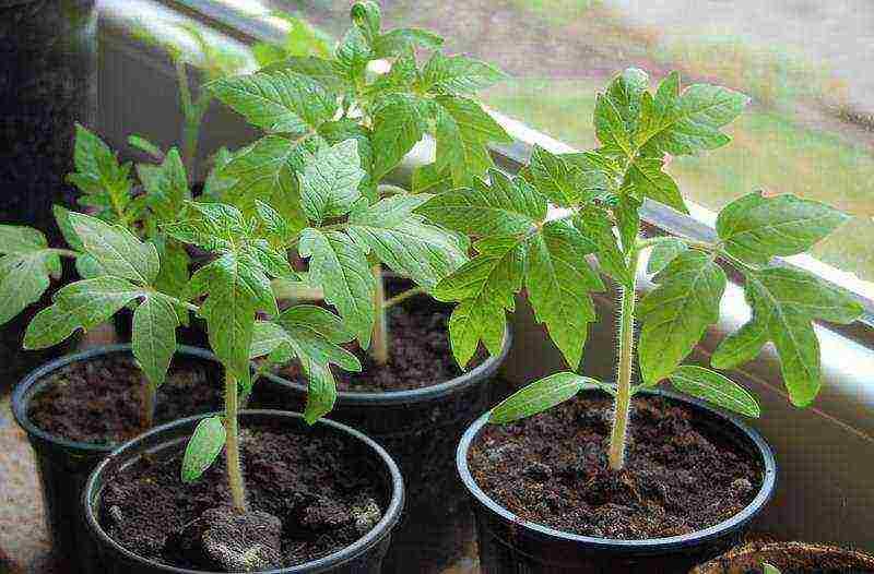 Выращивание рассады овощей в домашних условиях