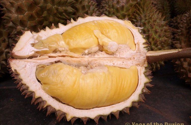 Фрукт дуриан: фото и рецепты фрукт дуриан: фото и рецепты