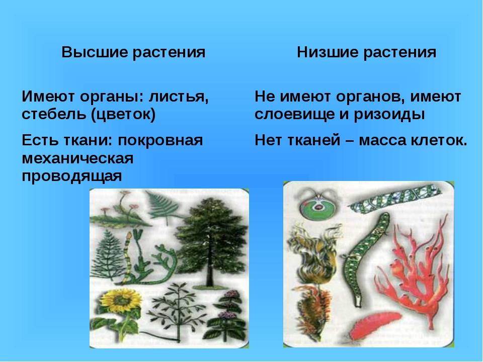 Низшие растения