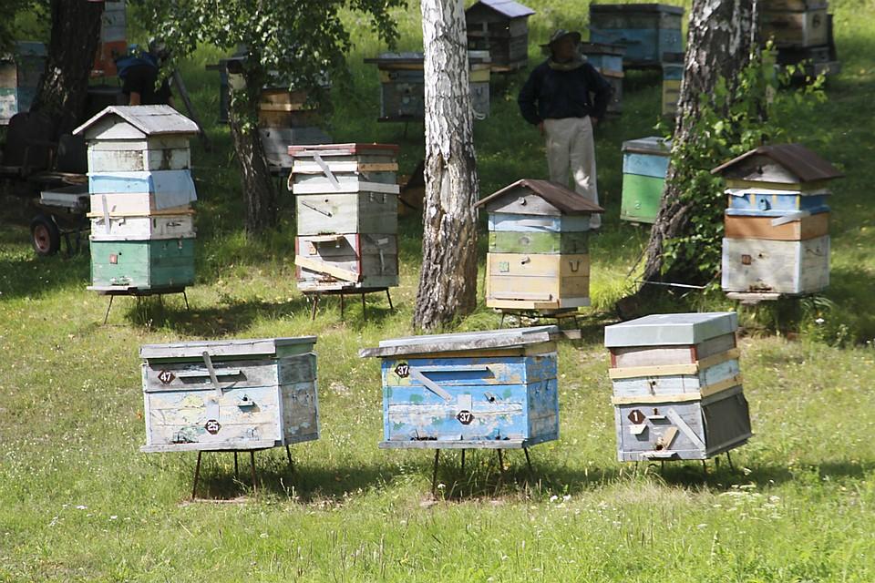 Пчеловодство для начинающих: что купить для пасеки