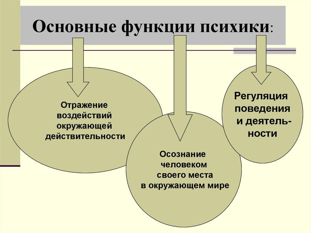 Понятие когнитивной сферы: что это такое в психологии, структура и значение