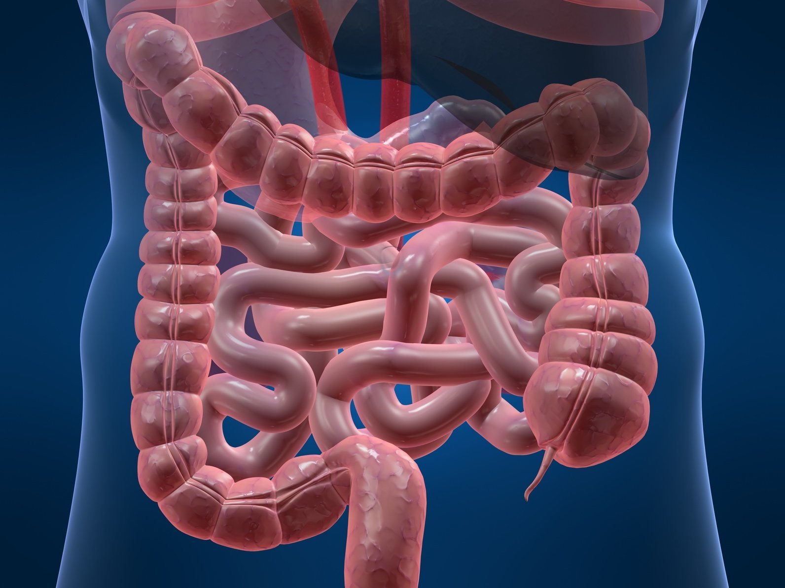 Что такое жкт , лечение и профилактика жкт