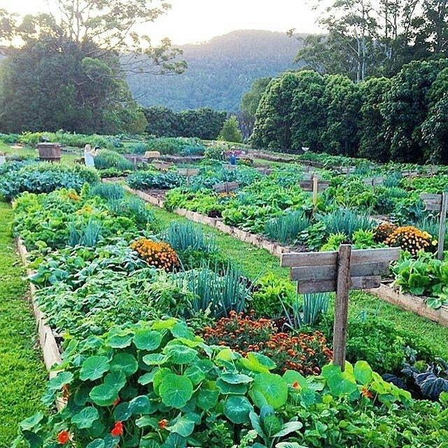 Пермакультура — самый природный способ земледелия