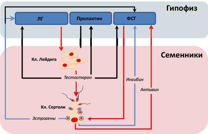 Пролактин и окситоцин — регуляторы выработки молока | женское здоровье