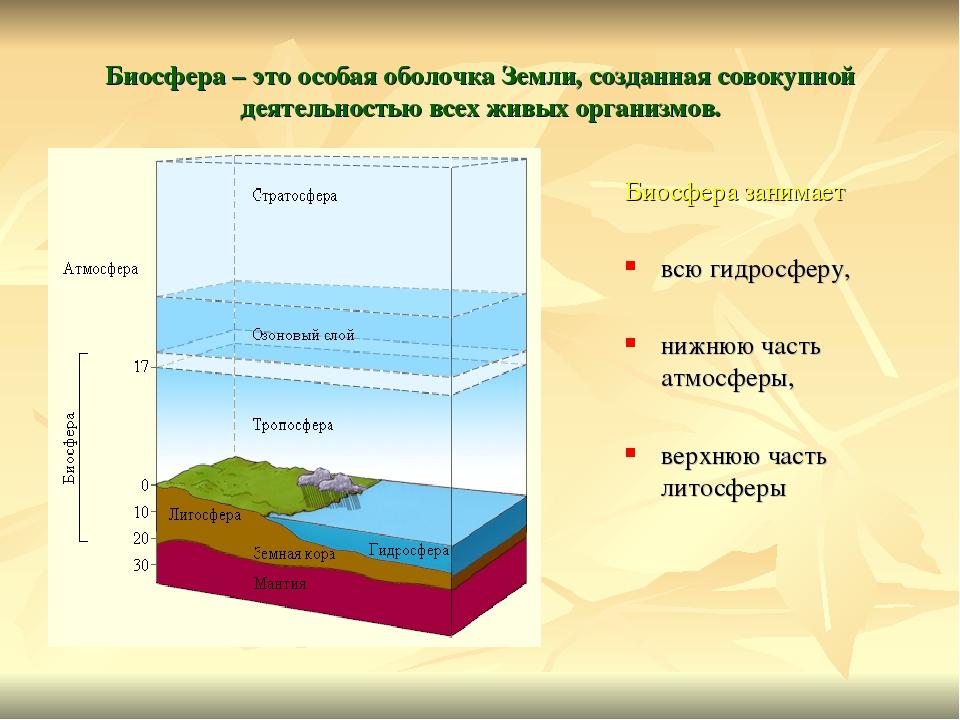Чем биосфера отличается от других оболочек. что такое биосфера и чем она отличается от других оболочек земли? особенности и функции биосферы