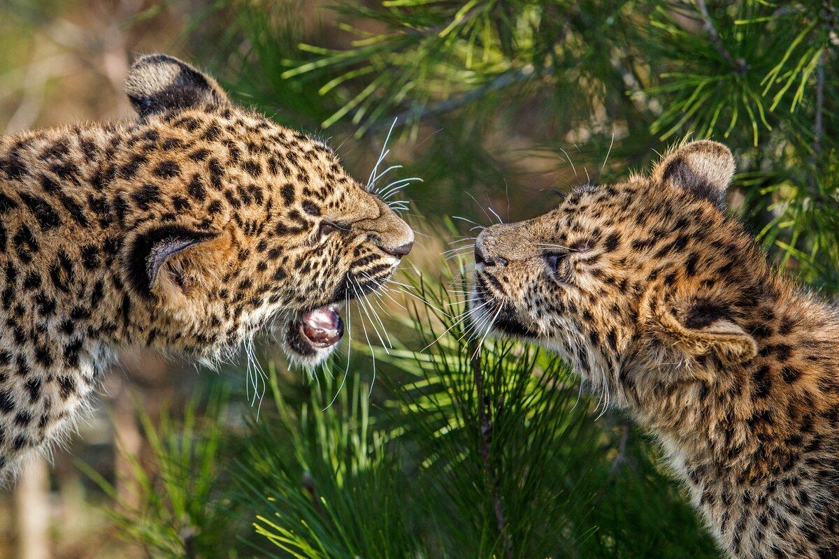 Животные мира – знакомые незнакомцы