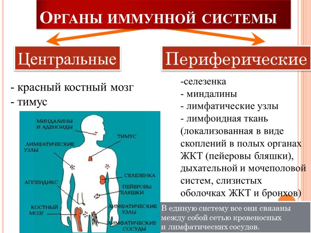 Виды иммунитета: суть понятия, особенности классификации